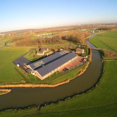 Kuikenboerderij en Pluimveebedrijf